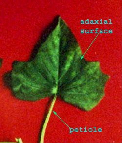 plant tissue culture notes pdf