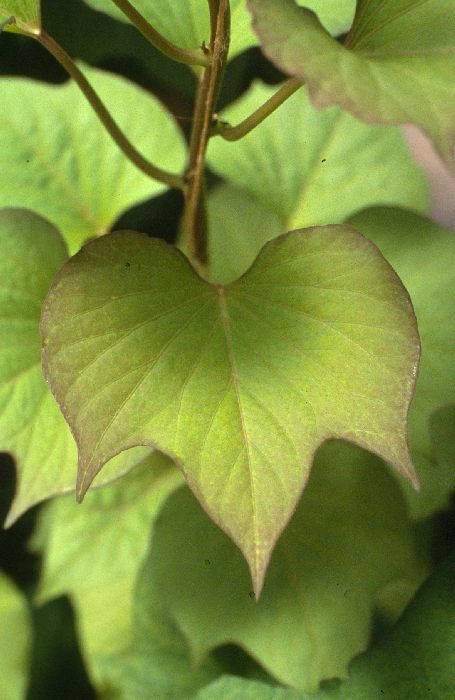 how to fix sulfur deficiency in plants