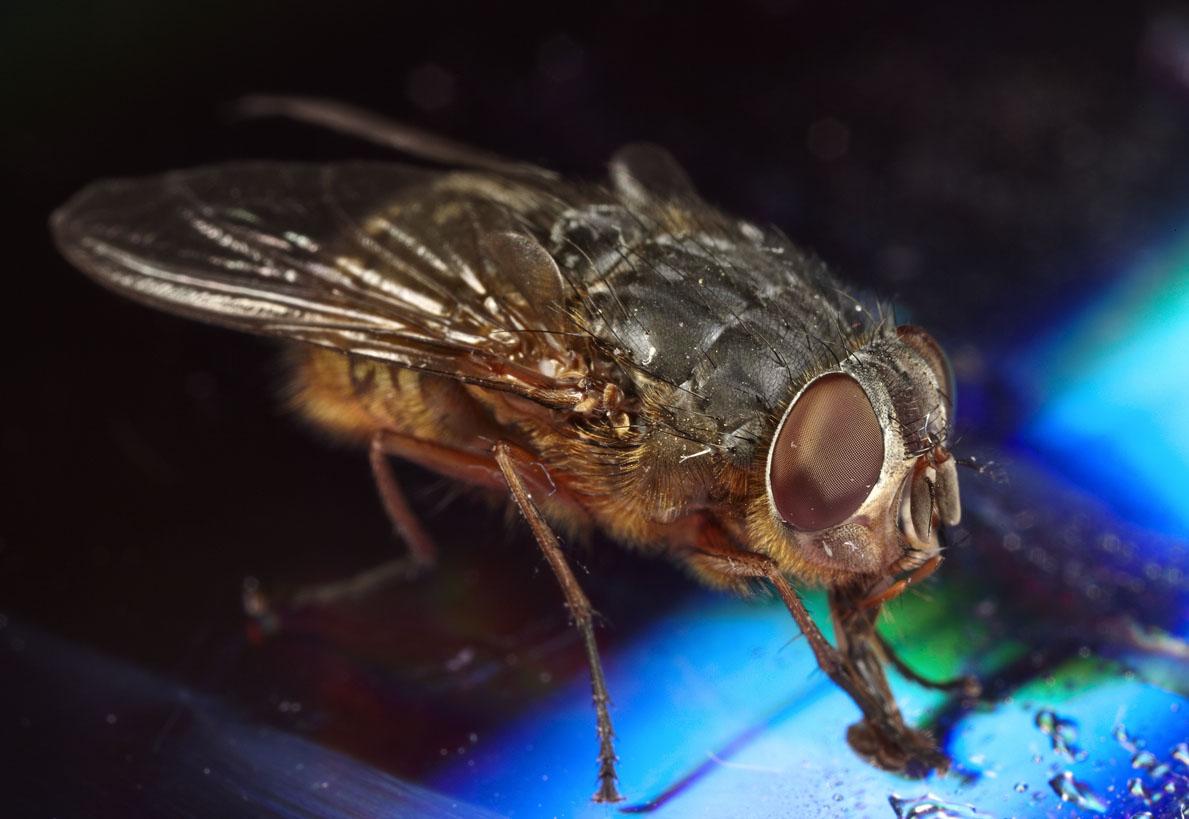 Phylum Arthropoda, Subphylum Hexapoda