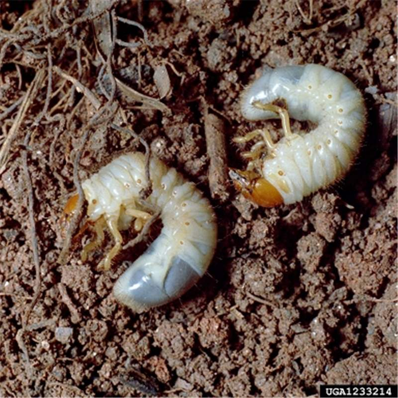 Worms. Treatment and Symptoms