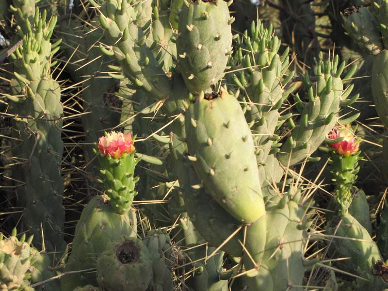 Opuntia Exaltata Branching besides Cylinder Liner Add furthermore D T Dust Under Screen Stuff as well Pergola besides Field. on screen parts