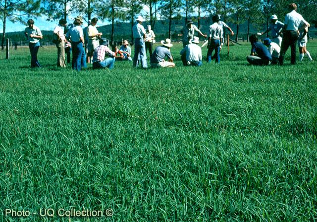 Factsheet Pangola Grass